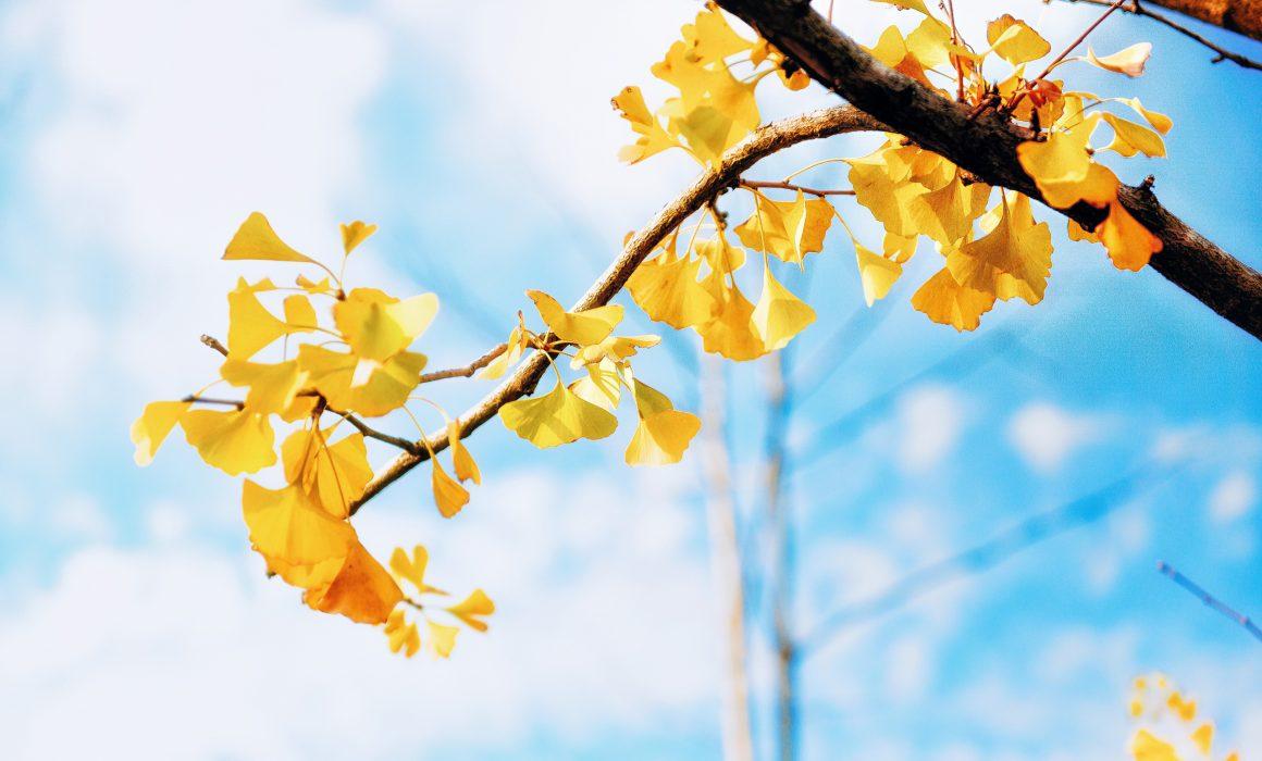 Ramo de árvore com folhas