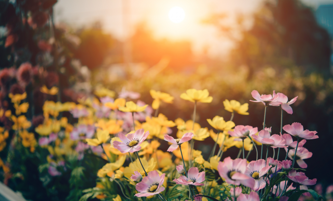 Plantas em flor